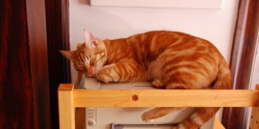 printercat