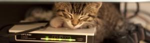Sleeping_Cat_NetworkPlus_Study_Tools