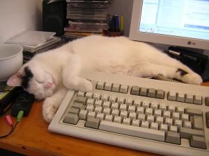 Sheila_the_PC_cat
